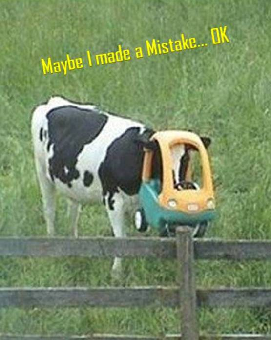 Cow Stuck - Made a Mistake OK